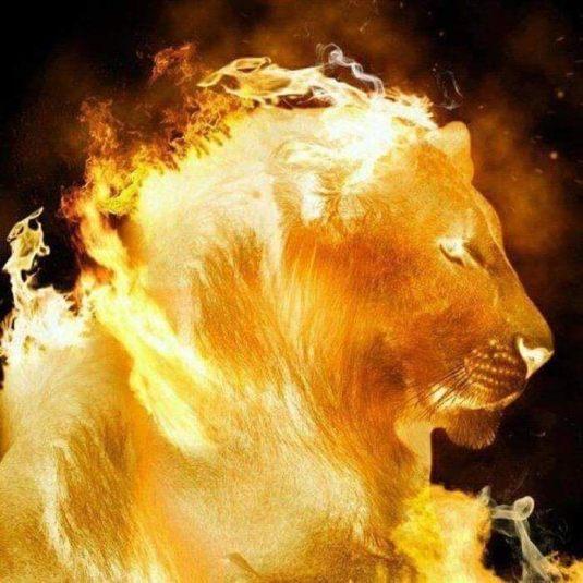 Imagme Leão